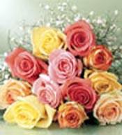 rosas para mi